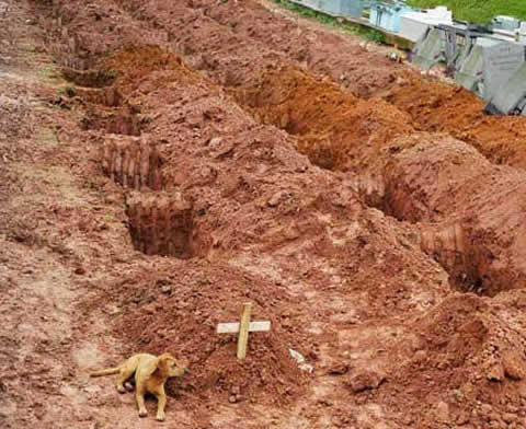Dog at owners grave